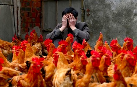"""Concerns about a resurgent H7N9 are reminiscent of those raised  the H5N1 """"bird flu."""" But there are key differences that make H7N9 more worrisome."""