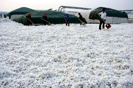 China Stockpiles Cotton