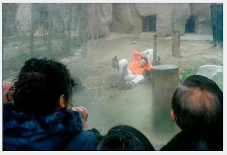 Man in tiger compound at Chengdu Zoo