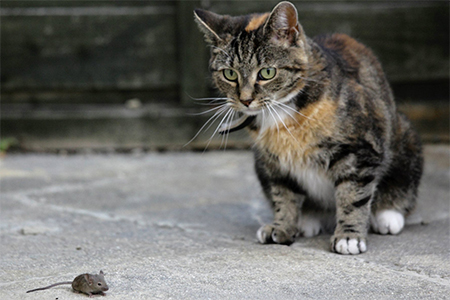A cat and mouse game.