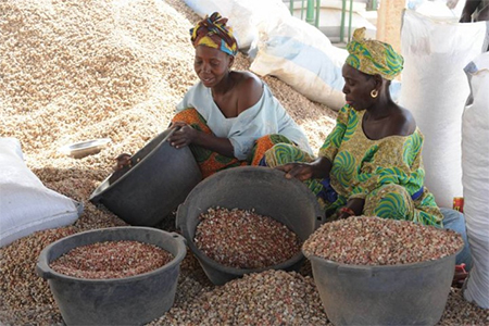 Chinese demand, such as for Senegal's peanuts, fuels the developing world's prosperity. (Photo: Japan Times)