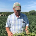 American Soybean Farmer
