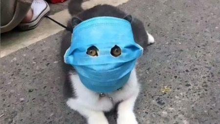 Cat With Coronavirus Mask