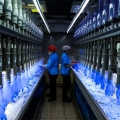 Employees check latex gloves in the watertight test room in Malaysia